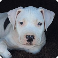 Adopt A Pet :: Scully - Chino Hills - Chino Hills, CA