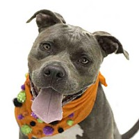 Adopt A Pet :: *HALE - Orlando, FL