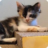 Adopt A Pet :: Jill - Cerritos, CA