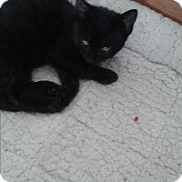 Adopt A Pet :: Houdini - South Windsor, CT