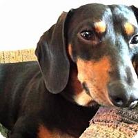 Adopt A Pet :: Fletcher aka Fletch - Jacksonville, FL