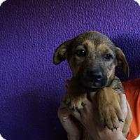 Adopt A Pet :: Echo - Oviedo, FL