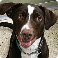 Adopt A Pet :: Rudy - Wenatchee, WA