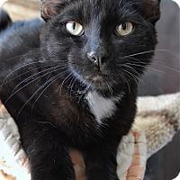 Adopt A Pet :: Earl - Michigan City, IN
