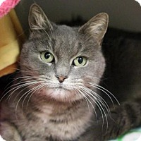 Adopt A Pet :: SALLY MAE - Boston, MA