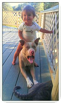 Pit Bull Terrier Dog for adoption in Atascadero, California - Bruce