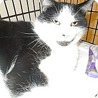 Adopt A Pet :: Billy - Medina, OH