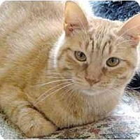 Adopt A Pet :: Bernard Fe1-7574 - Thibodaux, LA