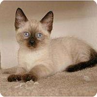 Adopt A Pet :: Pixie - Sacramento, CA