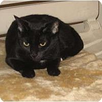 Adopt A Pet :: Cleo - Huffman, TX