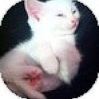 Adopt A Pet :: Annikin - Vancouver, BC