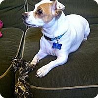 Adopt A Pet :: Chula - San Francisco, CA