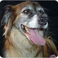 Adopt A Pet :: Rusty - Gilbert, AZ