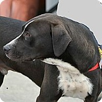 Adopt A Pet :: Chubbs - Homewood, AL