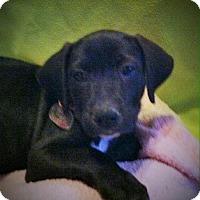 Adopt A Pet :: Aarti - Phoenix, AZ