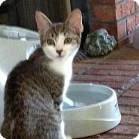 Adopt A Pet :: Grace - Monroe, GA