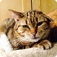 Adopt A Pet :: Travis - Stanhope, NJ