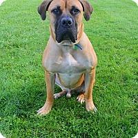 Adopt A Pet :: Taj-IL - Virginia Beach, VA
