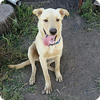 Adopt A Pet :: Cooper - Flemington, NJ