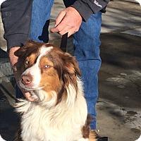 Adopt A Pet :: Kenai - Ogden, UT