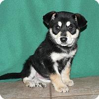 Adopt A Pet :: Marley - New Oxford, PA