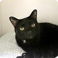 Adopt A Pet :: Flipper - Medina, OH