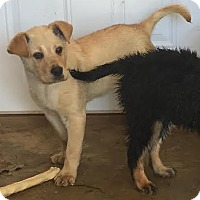 Adopt A Pet :: Carter - EDEN PRAIRIE, MN