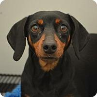 Adopt A Pet :: Marge - Humble, TX