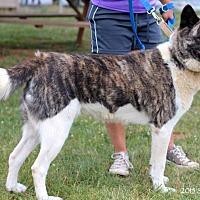 Adopt A Pet :: Opal - Virginia Beach, VA