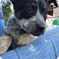Adopt A Pet :: Sally - Barnegat, NJ