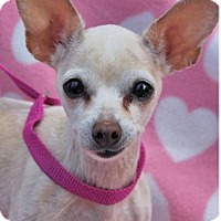 Adopt A Pet :: SUGAR:Low fees/spayed - Red Bluff, CA