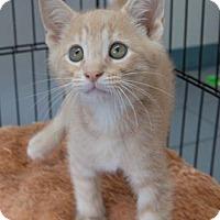 Adopt A Pet :: Keegan - Merrifield, VA