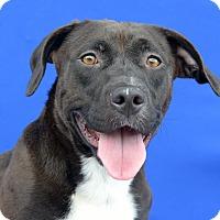 Adopt A Pet :: BUBBA - LAFAYETTE, LA