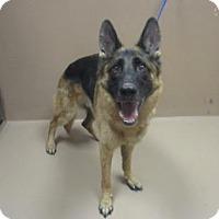 Adopt A Pet :: THOR - Reno, NV