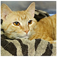 Adopt A Pet :: Laref - Forked River, NJ