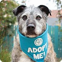 Adopt A Pet :: Luka - Pacific Grove, CA