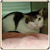 Adopt A Pet :: ZACK - Marietta, GA