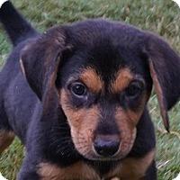 Adopt A Pet :: Chip - Durham, NC