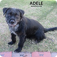 Adopt A Pet :: Adele - Elizabeth City, NC