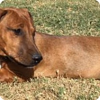 Adopt A Pet :: Oscar - Olive Branch, MS