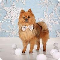 Adopt A Pet :: Bear 3406 - Toronto, ON