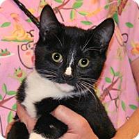 Adopt A Pet :: Kalis - Wildomar, CA