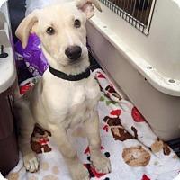 Adopt A Pet :: Branch - san diego, CA
