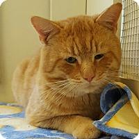 Adopt A Pet :: Vernon - Tombstone, AZ