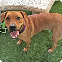 Adopt A Pet :: Holly - Ft. Lauderdale, FL
