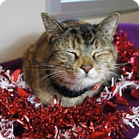 Adopt A Pet :: Amy Rose - McKinney, TX