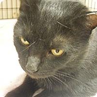 Adopt A Pet :: Athena - Medina, OH