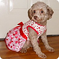 Adopt A Pet :: Molly - Mooy, AL