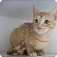 Adopt A Pet :: Eli - Warren, MI