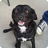 Adopt A Pet :: Angel - Lake Forest, CA